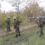 На Донбасі саперам вдалось знешкодили 600 вибухонебезпечних предметів за тиждень