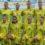 Жіноча футбольна збірна України здійснила ривок в рейтингу ФІФА